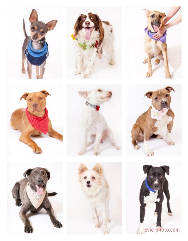 Pups 04-07-13