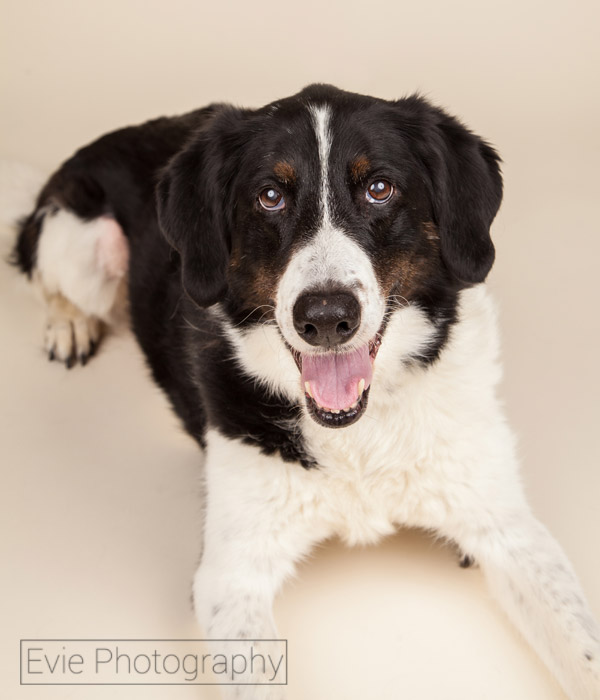Victor-dog-photo-boulder-evie-photography-web