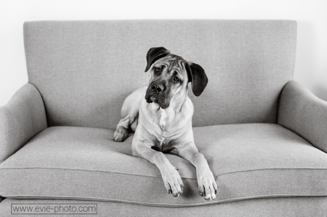 boulder-denver-pet-photographers-evie-photography-1013-bw