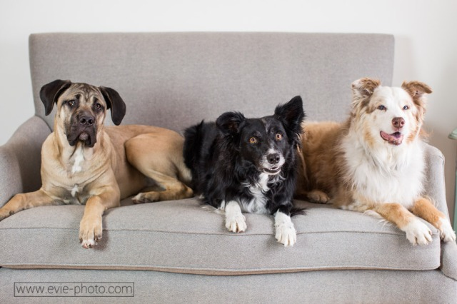 boulder-denver-pet-photographers-evie-photography-1035