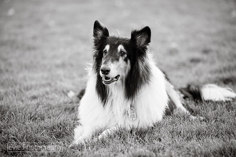 boulder-denver-pet-dog-photographer-evie-photography-4