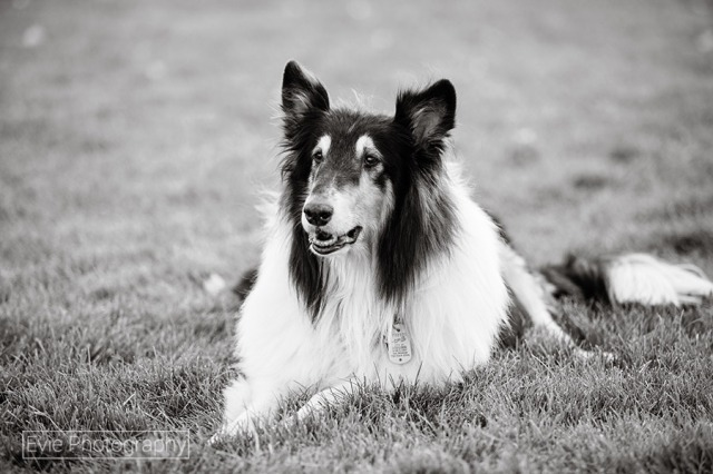 boulder-denver-pet-dog-photographer-evie-photography-4
