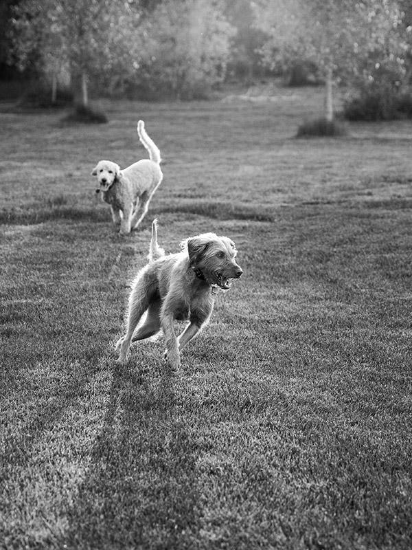 boulder-denver-pet-dog-photographer-evie-photography-5
