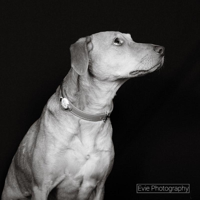 boulder-denver-pet-photographer-evie-photography