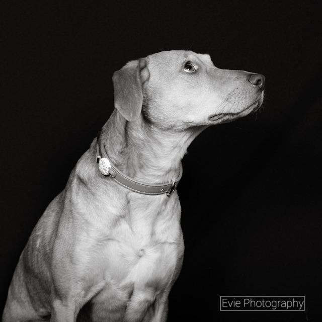 boulder-denver-pet-photographer-evie-photography