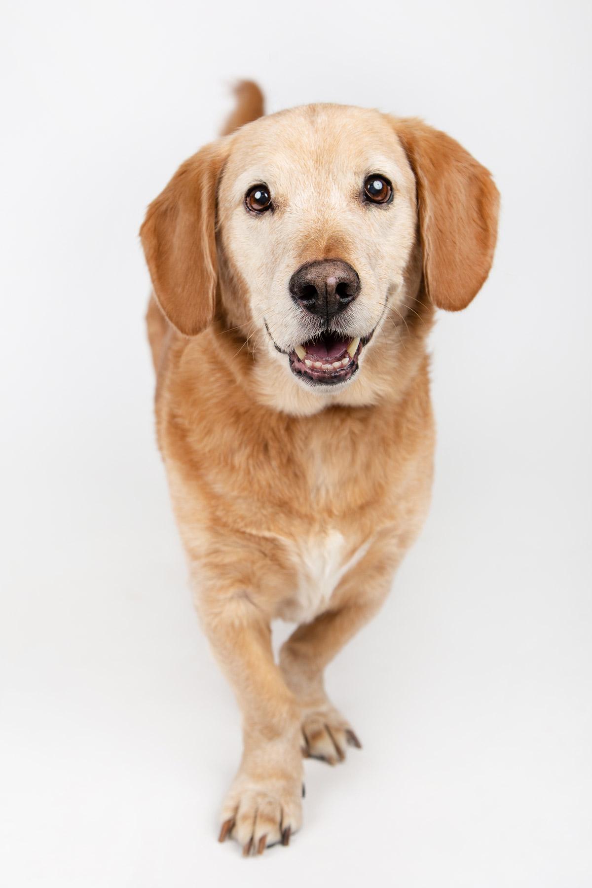 dog-photography-boulder-longmont-shelter-dog