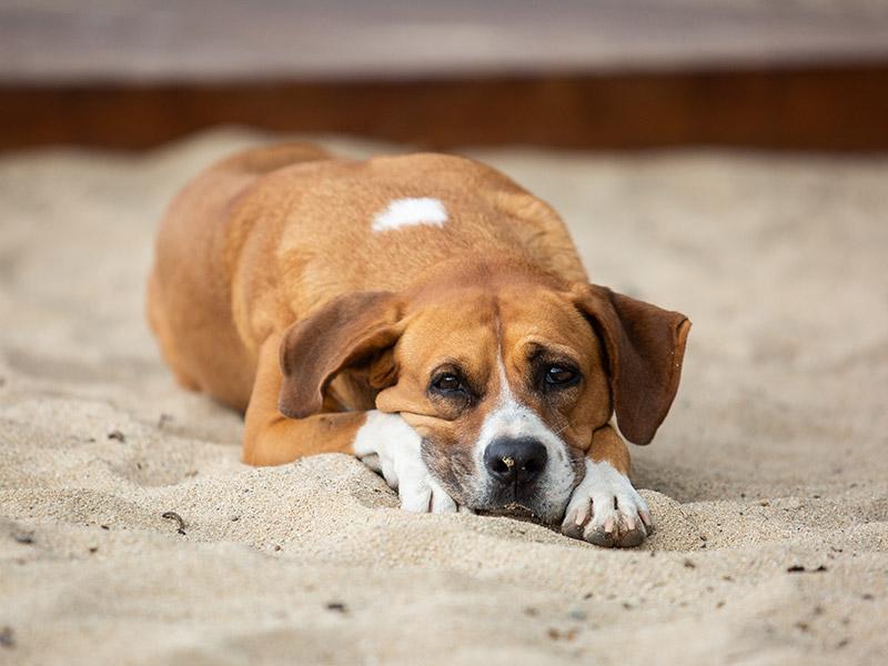 Dog-photography-boulder-evie-photography-098