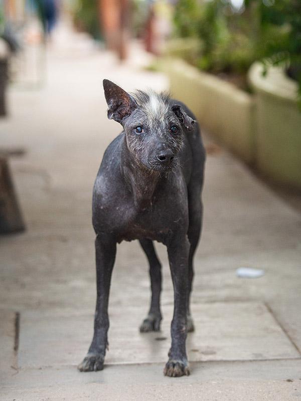 Dog-photography-boulder-evie-photography-099