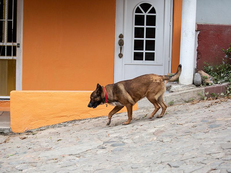 Dog-photography-boulder-evie-photography-103