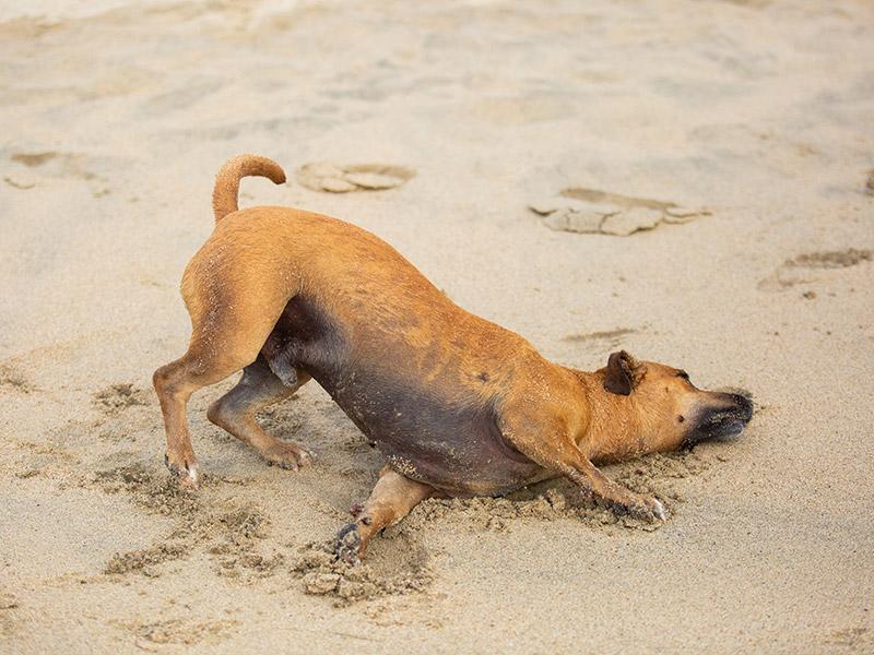 Dog-photography-boulder-evie-photography-104