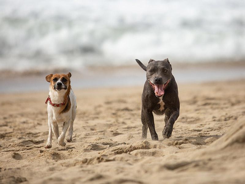 Dog-photography-boulder-evie-photography-104A