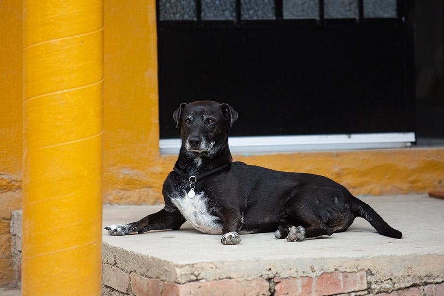 Dog-photography-boulder-evie-photography-105