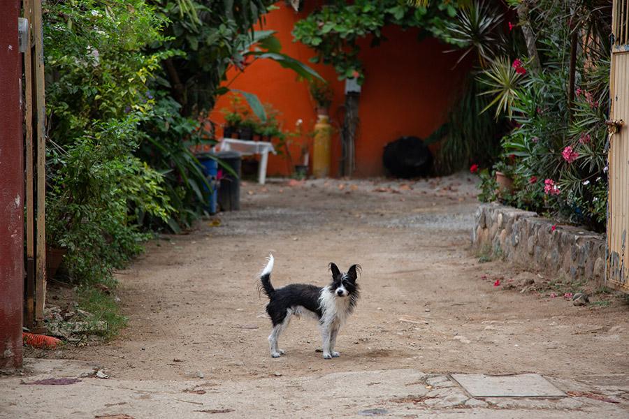 Dog-photography-boulder-evie-photography-106