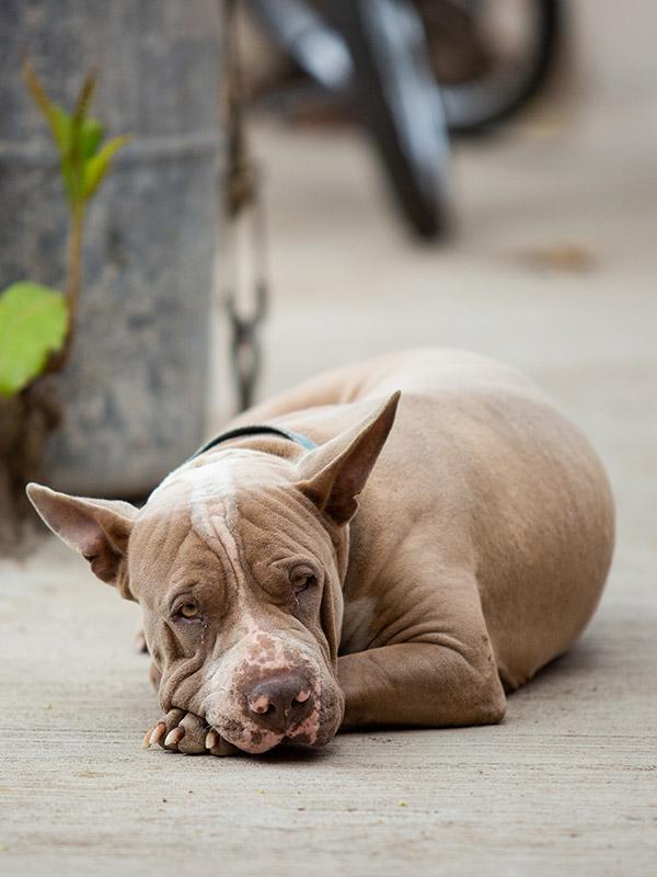 Dog-photography-boulder-evie-photography-108