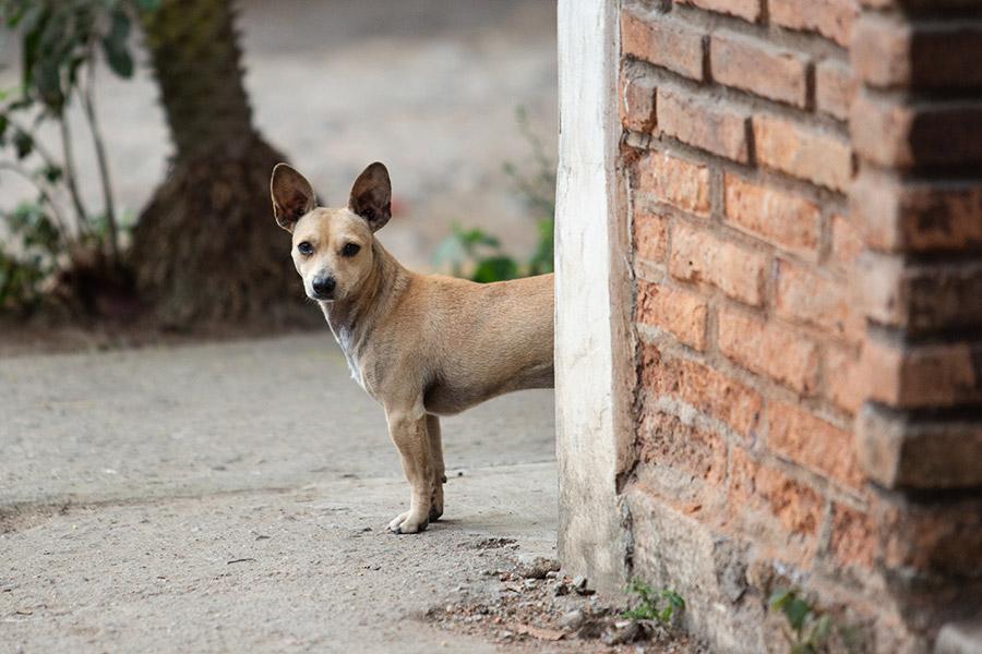 Dog-photography-boulder-evie-photography-109