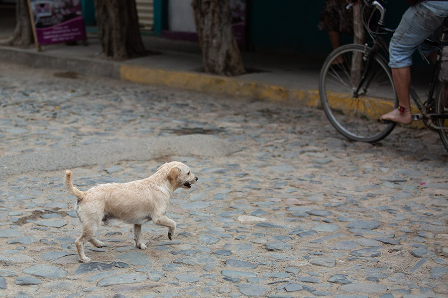 Dog-photography-boulder-evie-photography-111